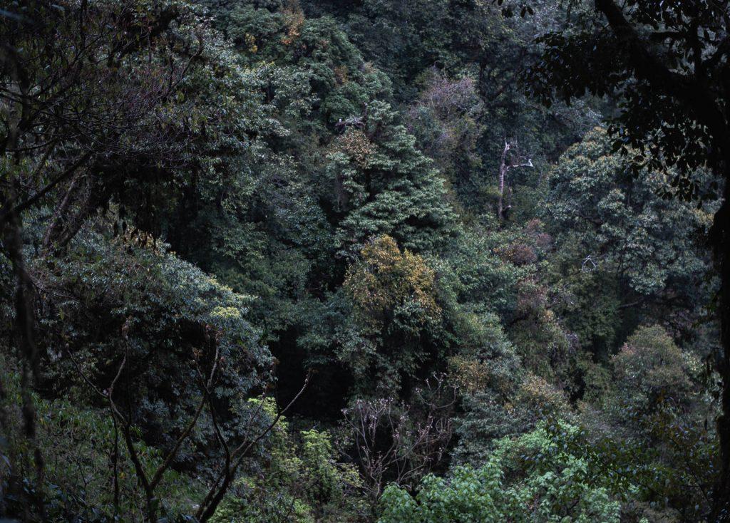 Surrounding forest of Khonoma