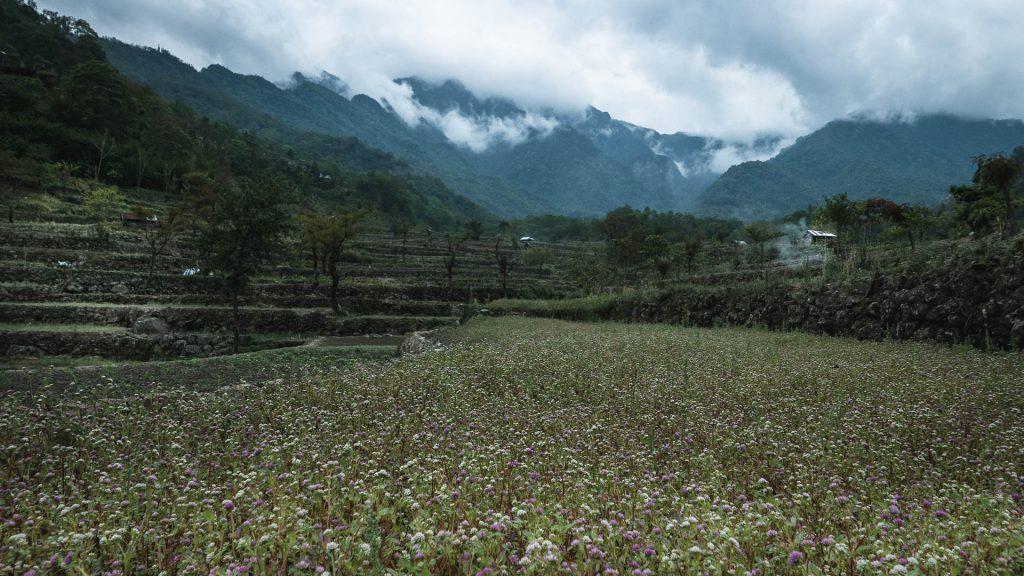 Terrace fields in Khonoma
