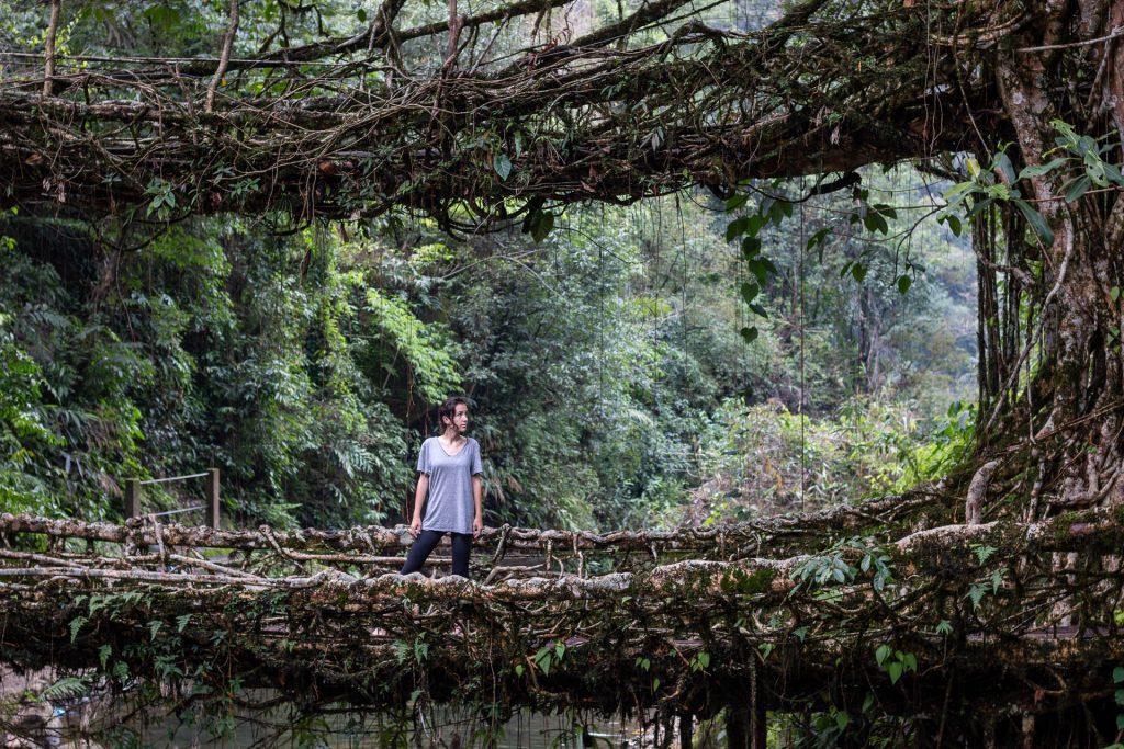 Root bridge in Nongriat, Meghalaya