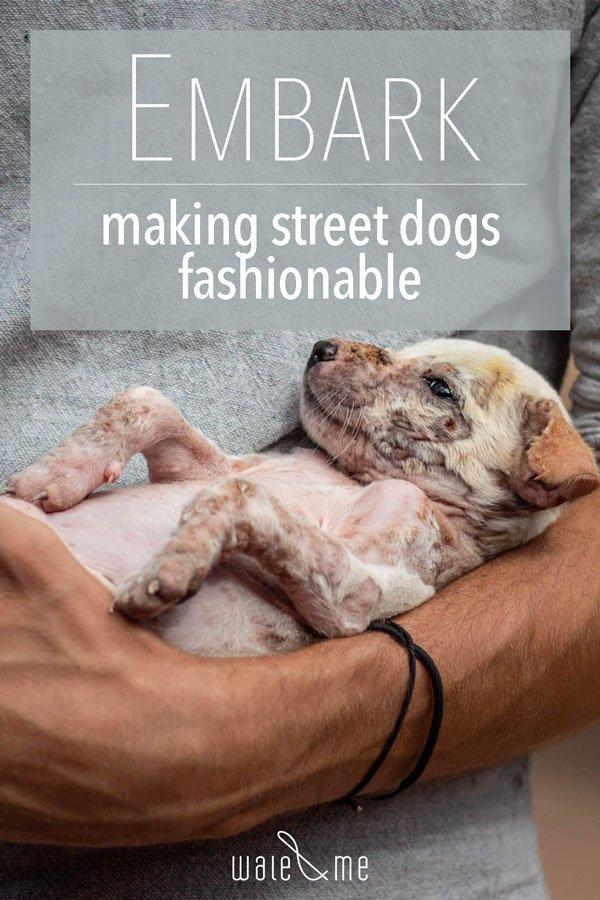 pinterest Embark, dog rescue Sri Lanka